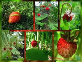 Wild Strawberries by MagicLolita