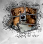 Photo Manipulation with a collie. by Sunny-Flamme