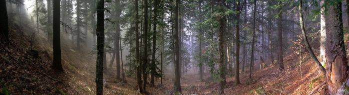 Forest pano by rdalpes