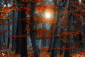 orange leaves by ildiko-neer