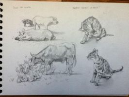 Animal sketches by MlleMalice