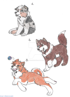 PUPPIES ADOPTABLES {CLOSE!} by ZoeyTheAussie