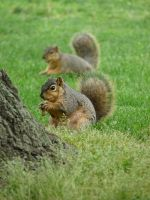 Squirrels by babynuke