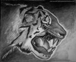 Tiger Drawing by Apeanutbutterfiend