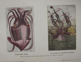 giant squid by bookscorpion