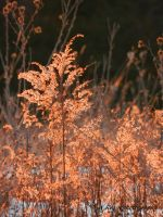 warmth in winter by wroquephotography
