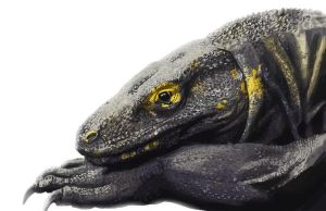 Komodo Dragon Study by Eliket