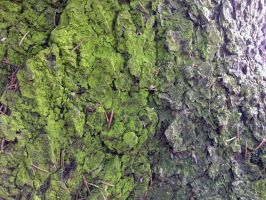 Free photo texture - Mossy pine bark #1 by croicroga