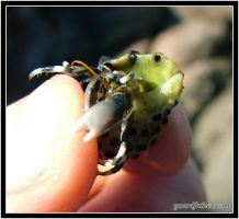 Tiny Hermit Crab 2 by Guardfather