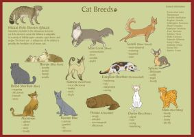 Breeds of Cats by Canvascope
