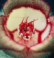 Blood root flower by SammieGavin