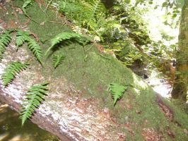 FOREST FERN CLOSE UP STOCK by Vee-Deviant