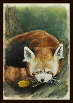 Red panda for mom! by emo88