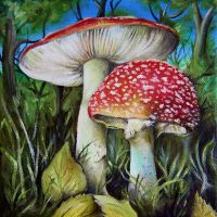Spotted Mushrooms by callum8am