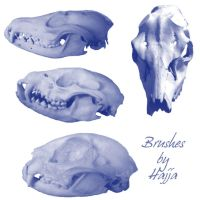 skulls of animals by aswad-hajja