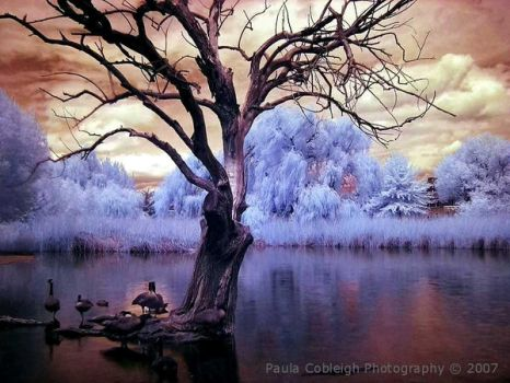 Infrared Pond by La-Vita-a-Bella