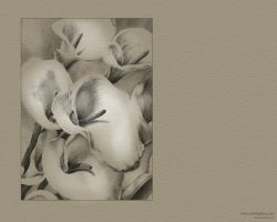 Lillies - pencil by doodlediddy