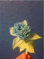 toilette paper rose i made by white2tattoo4