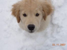 Puppy in the Winter by mochichi07