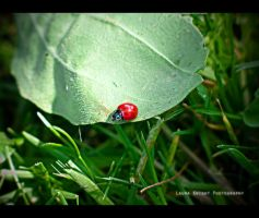 Ladybird. by Nowherexbutxhere