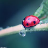 Little Creatures 089 by Frank-Beer