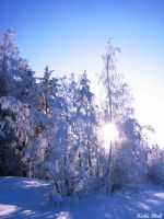 winter's sun by lintu13bird13