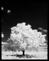 IR Tree by Captain-Galant