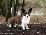 Striking Striker by DreamEyce