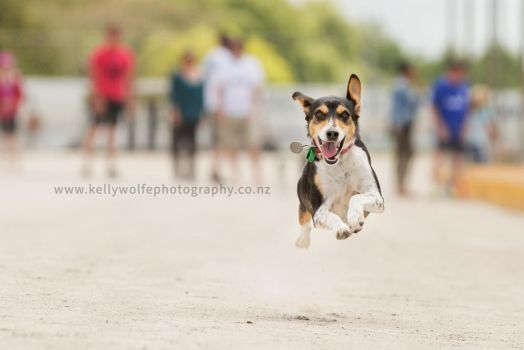Pooch Racing by KiwiTakeFlight