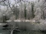 winter theme4 W.side frst pond by rekokros
