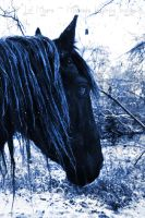 Ice Friesian 02 by MeetMeAtTheLake2Nite