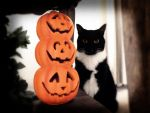 Halloween Cat by silverthorne-studios