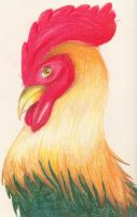 Rooster by LyonsGate