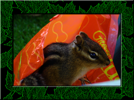 Bagful of Peanuts almost gone by venicet