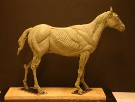 Horse Ecorche - Day 12 by aerie-