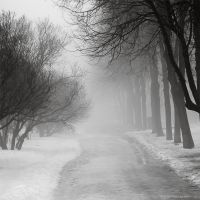 Fog by Snowfall-lullaby