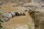 In the Mud... by Butch007