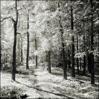 Magic Forest IR by hquer