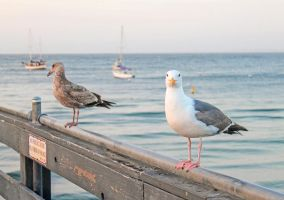 Gulls at Sunset by Fritters