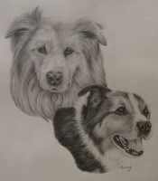Two Dogs Commission by xx-ashley