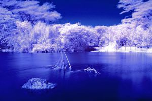 January Infrared 003 by otas32