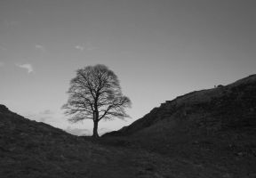 Sycamore Gap by SilverSurfer