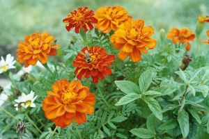 Orange Flowers and a Bee by Radical-Doubt