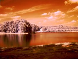 infrared. by JustOldPurpleAngel