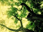 branching from within by enelde