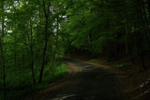 Secret forest road by sahk99