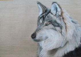 Wolf Portrait by Tiefenbacher