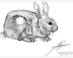 Cottontail Rabbit by kykiske20022003