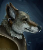 captain coyote by Grion