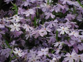 Purple Flowers by Cryanth